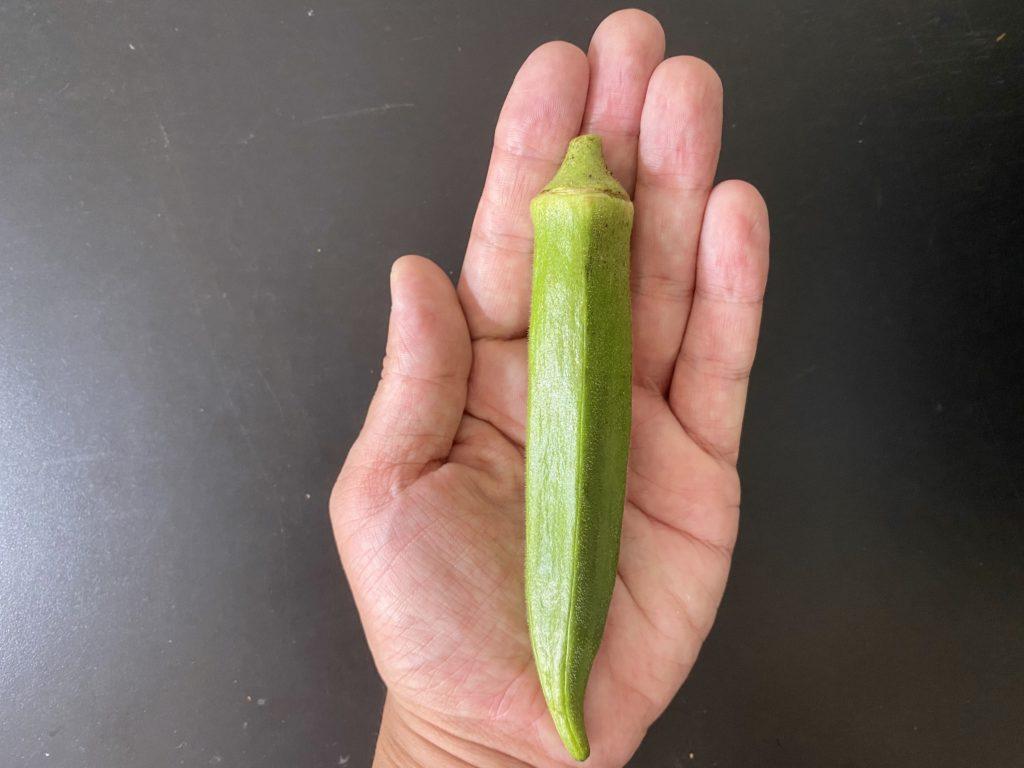 無農薬野菜のミレーオクラ